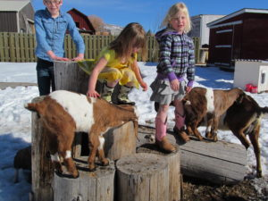 informal petting zoo/ nubian goats for sale